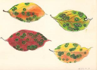 柿の葉.jpg