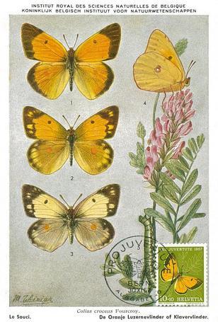 ヨーロッパモンキチョウ(1957年スイス発行).jpg