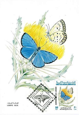 ヒメシジミの一種(1997年アラブ首長国連邦発行).jpg
