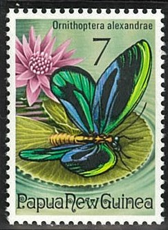 アレクサンドラトリバネアゲハ(1975年パプアニューギニア).jpg